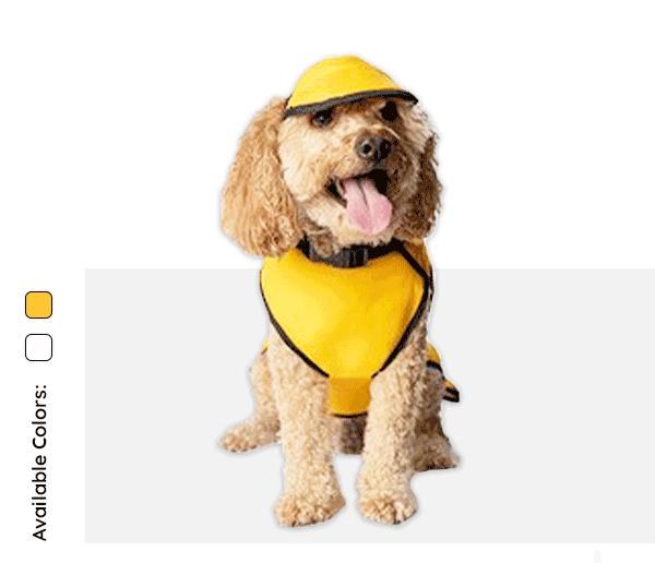 Tailored Dog